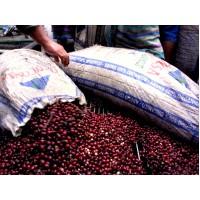 1磅組合價500元-瓜地馬拉 安提瓜精選 超高海拔卡杜拉種