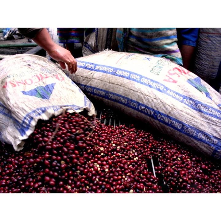 1磅特價500元-瓜地馬拉 安提瓜精選 超高海拔卡杜拉種