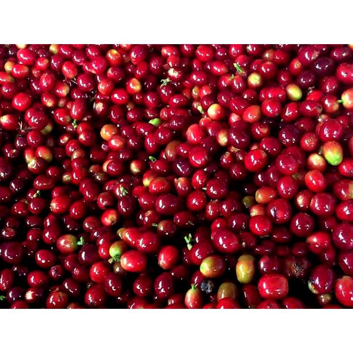 哥斯大黎加 唐瑪優莊園 卡杜拉種 白蜜處理