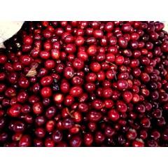 哥斯大黎加 聖塔特瑞莎莊園 紅卡太一種 白蜜處理
