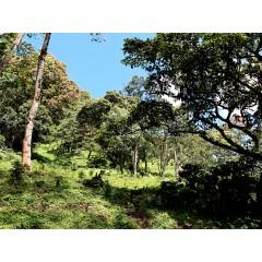 歐舍經典咖啡 藍山風味咖啡(中南美洲高海拔批次)