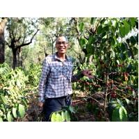 1月贈豆-宏都拉斯 拉帕斯區 卓越盃優勝莊園 黑莓果莊園 歐舍獨家批次