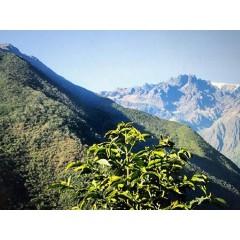 玻利維亞 塔給喜冠軍莊園 鐵皮卡老欉