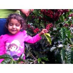 競賽得獎套餐-宏都拉斯 美景莊園/墨西哥 三季橘莊園