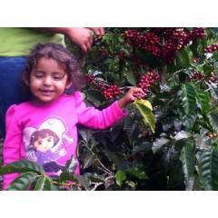 宏都拉斯 2016年卓越盃得獎批次 美景莊園(馬卡拉區)