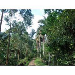 尼加拉瓜 檸檬樹莊園 黃帕卡馬拉 紅蜜處理 小農競賽批次