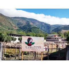 瓜地馬拉 2016 國家競賽優勝 阿卡提蘭夠火山區 美麗莊園