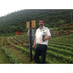瓜地馬拉 2018年卓越盃冠軍 改革莊園 水洗瑰夏種