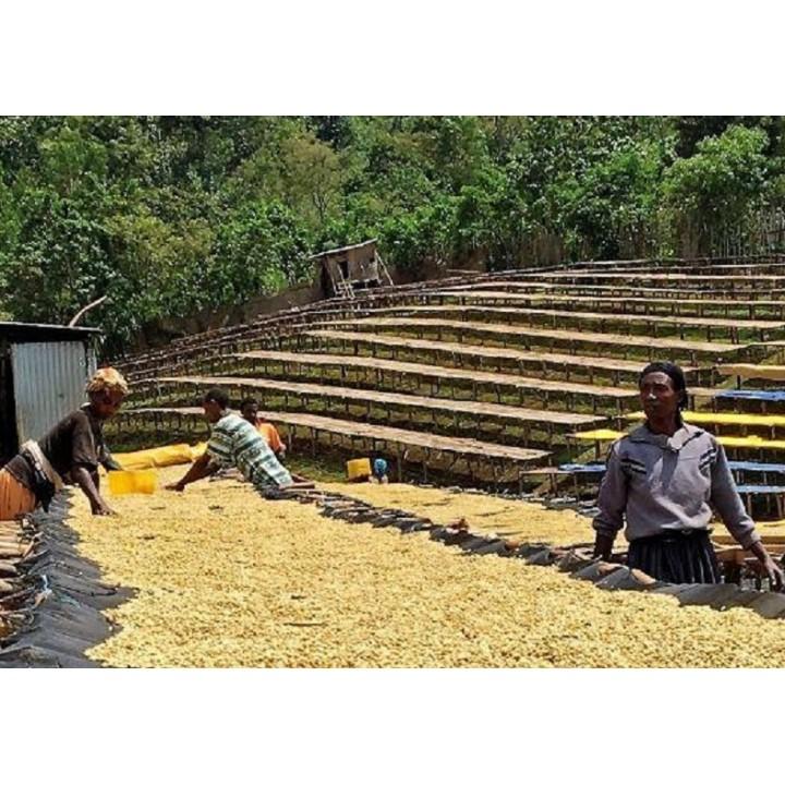 衣索匹亞 古籍 烏拉尬區 水洗 杜歌阿都拉小農 歐舍批次319