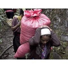 瓜地馬拉 薩拉爾莊園 卡杜拉種 水洗處理