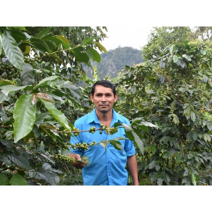 宏都拉斯 拉斯莫拉斯莊園 卡太一種 水洗處理 批次239