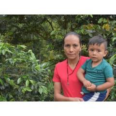 宏都拉斯 布維納威斯達莊園 卡太一種 水洗處理 批次244