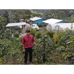 宏都拉斯 楓香莊園 卡太一種 水洗處理 批次243