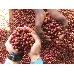 肯亞 尼耶利區 吉洽沙宜尼 小圓豆