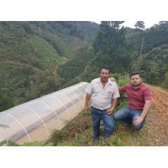 宏都拉斯 月桂樹莊園 Parainema種 水洗處理 批次241