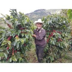 宏都拉斯 聖荷西莊園 頂尖蜜處理 批次253