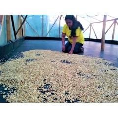 哥倫比亞 薇拉區 迪維索莊園 水洗處理 批次108