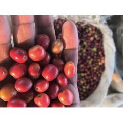 衣索匹亞 立姆區 給拉小農精選水洗 批次107