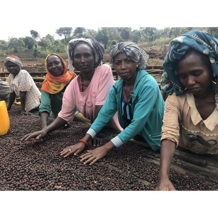 衣索匹亞 古籍 科洽區 班寇米契洽處理場 水洗 批次187