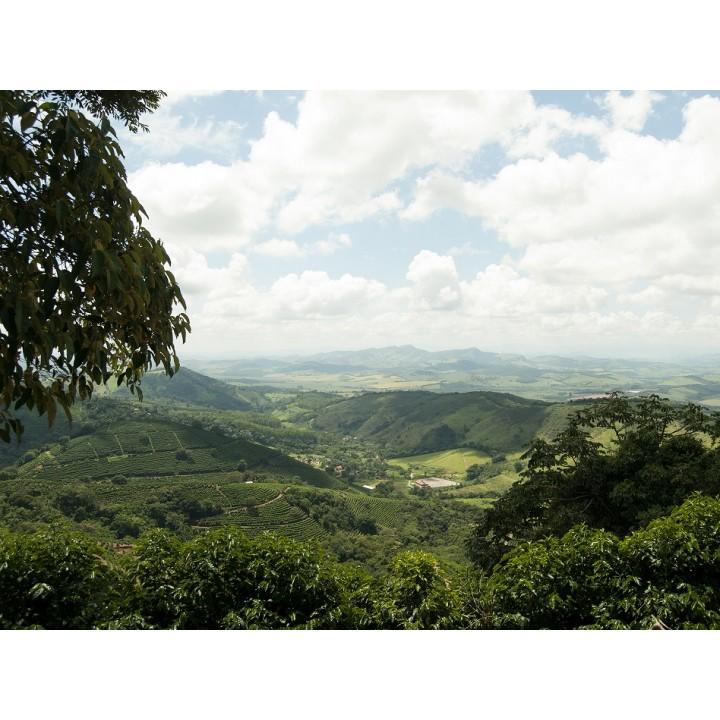 巴西 米納斯州卡摩區 綠寶石莊園 黃波旁種 PN處理 批次1012