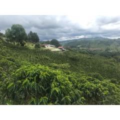 哥倫比亞 薇拉區 拉波達達莊園 粉紅波旁種 水洗處理 批次106