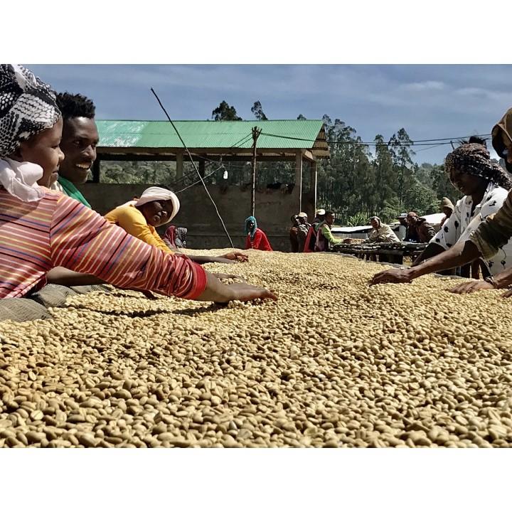 1磅特價600元-衣索匹亞 古籍區 漢貝拉處理場 水洗 歐舍直接批次