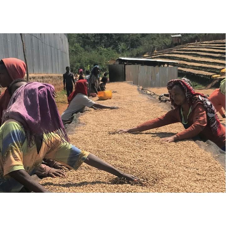 衣索匹亞 古籍區 莎奇恰小農 蜜處理