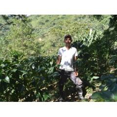 宏都拉斯 洋芋莊園 帕拉涅瑪品種 水洗處理