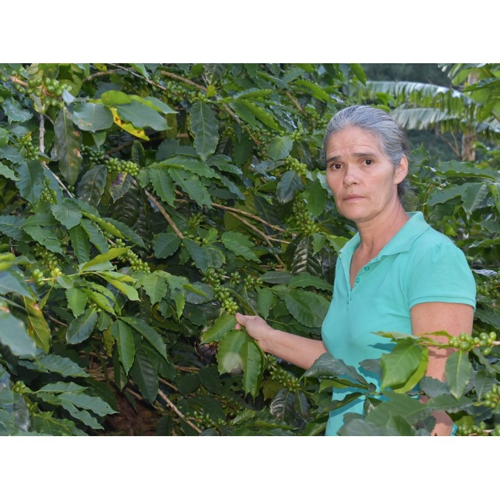 宏都拉斯 艾貝奈茲莊園 帕拉涅瑪種 水洗處理 批次30A