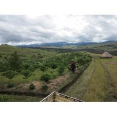 新豆推薦-巴布亞新幾內亞 東部高地 Baroida處理場 水洗 Tairora小農批次 AX級
