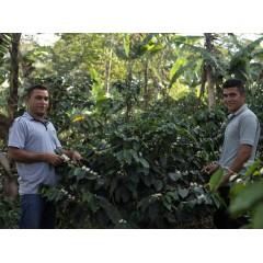 尼加拉瓜 2020卓越盃國家優勝 幸運莊園 卡帝莫種 水洗處理