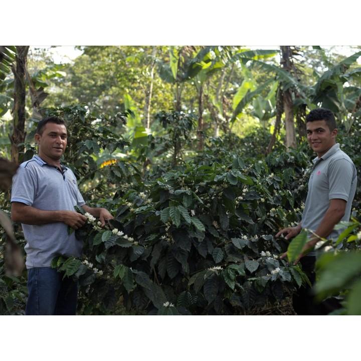 4月新豆推薦-尼加拉瓜 2020卓越盃國家優勝 幸運莊園 卡帝莫種 水洗處理