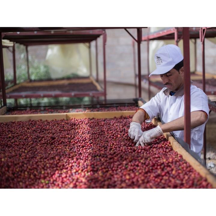 【熟豆1/4磅】【名豆一夏】葉門 2020 Qima競標批次第9名 Haraaz山脈 Mutawasat合作社 日曬慢乾