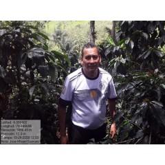 祕魯 喀哈馬卡區 月桂樹莊園 鐵皮卡種 水洗處理