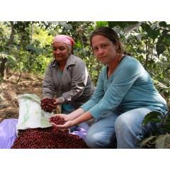 【熟豆1/4磅】【Expert 推薦】瓜地馬拉 聖費麗莎莊園 競標批次 SL28 厭氧日曬 #14-01