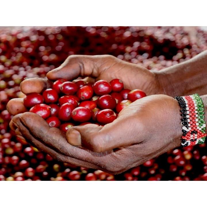 東非水果組-肯亞 瓦慕谷瑪處理廠 AB/衣索匹亞 班寇米契洽 日曬