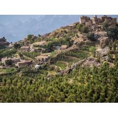 葉門 沙那-雷瑪區 海拔2300公尺小農傳統日曬法