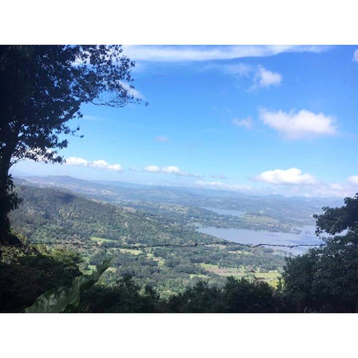 尼加拉瓜 德利西斯莊園 日曬爪哇長顆種 批次2291