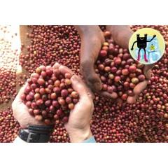 【咖啡熟豆】肯亞 尼耶利區 吉洽沙宜尼 小圓豆