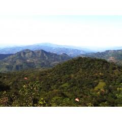 經典組合A組-瓜地馬拉 超高海拔/薩爾瓦多 雲霧莊園