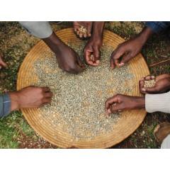 衣索匹亞 博瑞納區 博瑞納合作社 水洗耶加雪夫